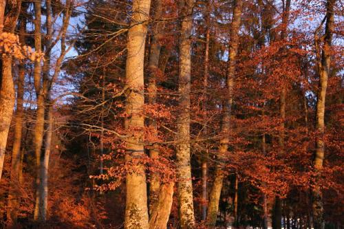 Sonnenuntergang Buechberg Fislisbach